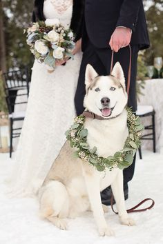 Adorable Husky Dog for a Winter Wedding | Kristina Staal Photography on @classicbride