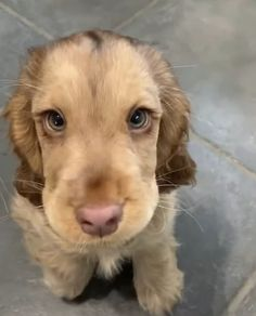 smiling puppies so cute ~ puppies smiling Cute Funny Animals, Cute Baby Animals, Animals And Pets, Funny Dogs, Cute Dogs And Puppies, Pet Dogs, Dog Cat, Puppies Puppies, Doggies