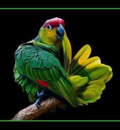 colors, bird.
