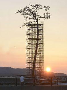 The miracle pine - single tree that survived the 2011 Japanese tsunami turned into monument  Rikuzentakata, Iwate, Japan