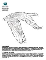 canada goose printable animal coloring pages kleurplaat pinterest canada coats and coloring. Black Bedroom Furniture Sets. Home Design Ideas