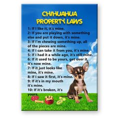 CHIHUAHUA+Property+Laws+MAGNET+No+3+Steel+Cased+DOG++#WagWhimsy