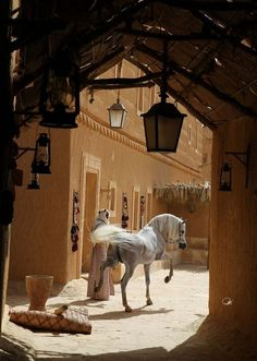 .Arabian horse...in native home