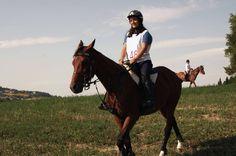 cavallo Anglo Arabo Orientale castrone 6 anni Oriental, Riding Helmets, Horses, Animals, Animales, Animaux, Animal, Animais, Horse