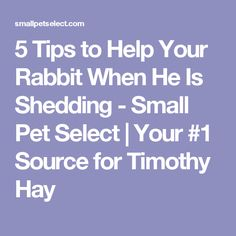 5 Tips to Help Your Rabbit When He Is Shedding - Small Pet Select | Your #1 Source for Timothy Hay