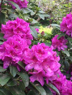 Les 51 Meilleures Images De Les Jardins De Ma Arbres Et
