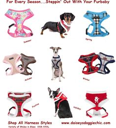 "What's Your Style? ""Step in, Halter, Vest, Jacket"" Shop Pet Harnesses at Daisey's Doggie Chic"