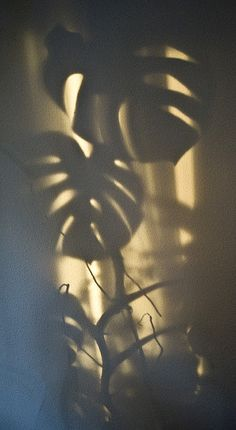 Shadow Play by nokkie1 on Flickr.