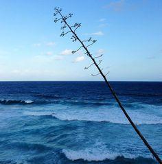 Blue... by pam_paz http://ift.tt/1KBxVYg