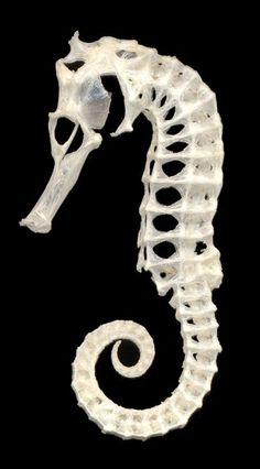 cartilage parts?