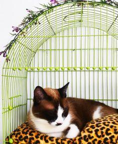 antes-e-depois-cama-de-gato-na-gaiola-3