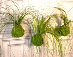 Kokedama Hanging Moss Ball String Garden. Care by ArtisanMoss