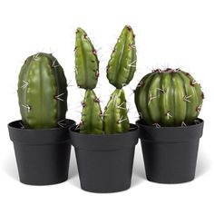 Abbott Three-Piece Cactus Arrangement ($25) ❤ liked on Polyvore featuring home, home decor and cactus home decor