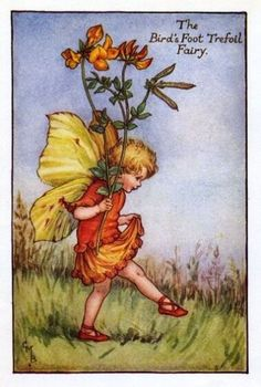 Birds-Foot Trefoil Flower Fairy Vintage Print by Cicely Mary Barker. first published in London by Blackie, 1925 in Flower Fairies of the Summer.