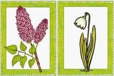 Bildkarten mit frühlingshaften Pflanzen    Nach den Osterferien möchte ich im Englischunterricht mit meiner Klasse als Sonderthema einiges ...