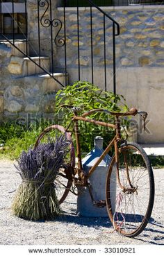 bicycle, Provence Lavender