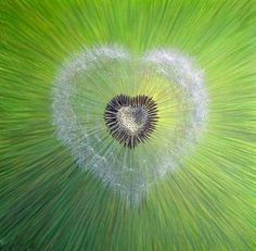 Heart by French artist painter Pierre Marcel. Heart In Nature, All Nature, Heart Art, I Love Heart, With All My Heart, Love Is All, Art In Miami, Dandelion Wish, Dandelion Flower