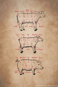 American Meat Cuts Posters - Set of Four | thesweettooth.co