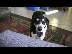 Talking Dog Wants A Kitten - by Klaatu42 - YouTube