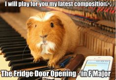 What Is The Best Guinea Pig Bedding? Photo by picto:graphic Guinea pig owners routinely utilize wood or paper types of shavings as the bedding for their pets. Diy Guinea Pig Cage, Baby Guinea Pigs, Guinea Pig Toys, Guinea Pig Care, Funny Animal Memes, Funny Animal Pictures, Cute Funny Animals, Funny Memes, Hilarious