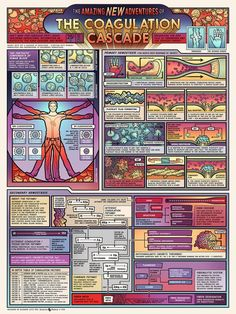 New Poster: The Coagulation Cascade