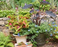Containers from Jeff in Tennessee--click through to see more photos of this garden!