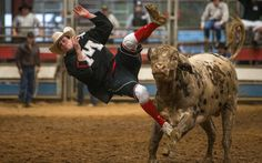 Sankey Rodeo Bull Fighter Training espn.go.com Anthony Castor, 23, a cabinet maker from Fargo, North Dakota, gets tossed during training. Sankey's students are a mixture of newbies who want to fight professionally and people just looking for a thrill. The school hosts classes in four disciplines: bull riding, bull fighting, saddle bronc riding