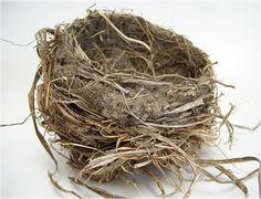 a robin's nest, via Flickr. simple up