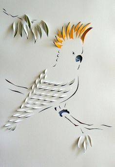 Cockatoo-pin it by carden