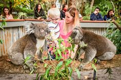 Enjoy a unique Sunday breakfast with the koalas at the Maze Family Fun Park, Bullsbrook, Perth Australia Tourism, Perth Western Australia, Australian Animals, Activities For Kids, Stuff To Do, Bear, Children, Sunday Breakfast, Fun