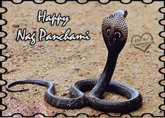 #Hotel Lohias wishes you all on the auspicious occasion of Nag Panchami.  Shubh Nag Panchami !!!