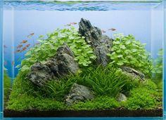 Click this image to show the full-size version. Aquarium Terrarium, Garden Terrarium, Aquarium Fish Tank, Planted Aquarium, Tropical Freshwater Fish, Freshwater Aquarium Fish, Tropical Fish, Aquascaping, Aquarium Landscape