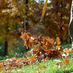 Put Fall Leaves to Work: Gardener's Supply