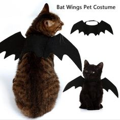 Costume Chat, Bat Costume, Pet Halloween Costumes, Fete Halloween, Dog Costumes, Halloween Decorations, Costume Wings, Spider Costume, Halloween Clothes