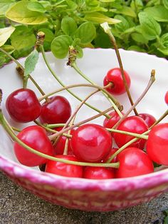 Our yummy cherries.