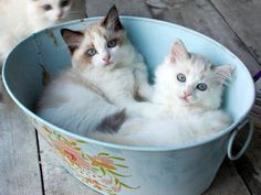 2 Kittens sitting in a Tub