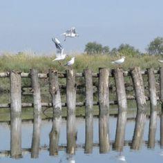 Il Delta del Po: Come godersi al meglio questo trancio di natura Unesco