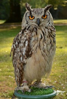 My tattoo is based on this owl