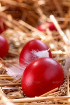 Easter eggs ...  background, basket, blue, boiled, celebration, chicken, closeup, color, colorful, concept, decoration, decorative, diet, easter, egg, eggs, farm, festive, food, fresh, green, hay, healthy, hen, holiday, house, hunt, ingredient, isolated, natural, nature, nest, oval, protein, red, seasonal, spring, straw, symbol, table, tradition, traditional, white, wooden, yellow