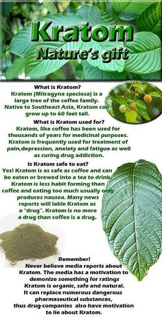 #Kratom #facts #naturesgift