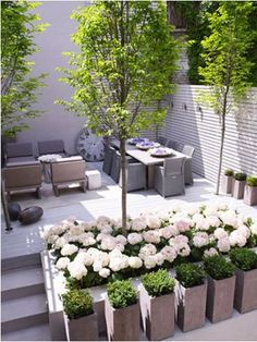 10 Wonderful Useful Tips: Balcony Garden Ideas Life backyard garden design fruit trees.Backyard Garden Texas Plants garden ideas for small spaces simple. White Gardens, Small Gardens, Outdoor Gardens, Small Courtyard Gardens, Roof Gardens, Boxwood Planters, Concrete Planters, Terrace Garden, Garden Oasis