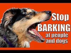 How to TEACH ANY DOG NOT to BARK at Other DOGS and PEOPLE on a Walk - YouTube