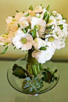 Green centered anemone