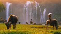 Les chutes d'eau de Ban Gioc, à la frontière chinoise, sont les plus impressionnantes du Vietnam.