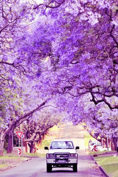 Beauty of South Africa : Pictures Images Photos