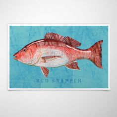 New to johnwgolden on Etsy: Red Snapper Art Print- Saltwater Fish Art- Beach House Decorations- Fish Gifts for Husband- Winter Flounder Print- Dad Gifts- For Dad (12.00 USD)