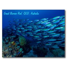 This amazing postcard displays one of the abundant schools of tropical fish found on Australia's Great Barrier Reef. #coral #reef #ocean #sea #diver #tropicalfish #greatbarrierreef #coralsea #coralreef #nature