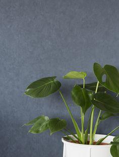 Plant Leaves, Plants, Color, Colour, Flora, Plant, Colors