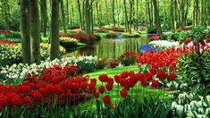 hermoso jardín fondos de escritorio 26305