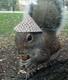Well Im Off To Tend My Flower Garden Sneezy The Penn State - Student befriends campus squirrels then dresses them in the cutest outfits ever